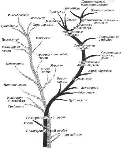 Родословное древо животного